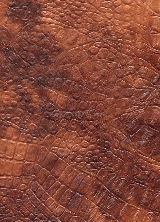Brown gada naturalna rzemienna tekstura Smok skóra obrazy stock