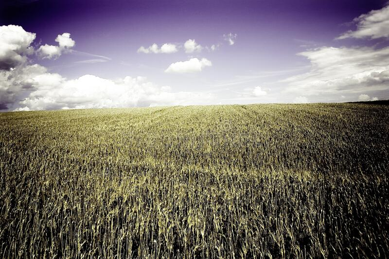 Brown Grass Field Under White Cloudy Blue Sky stock photography