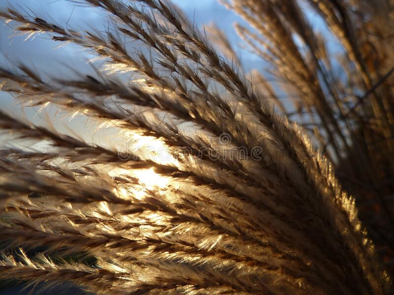 Brown Grass Plant during Daytime royalty free stock image