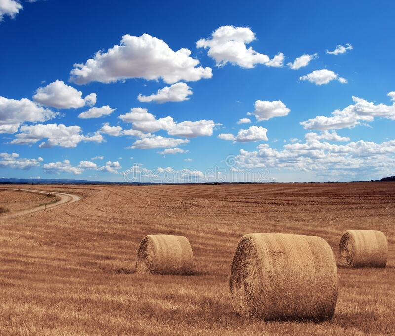 Brown Grass Under Clear Blue Sky Under during Time royalty free stock photos
