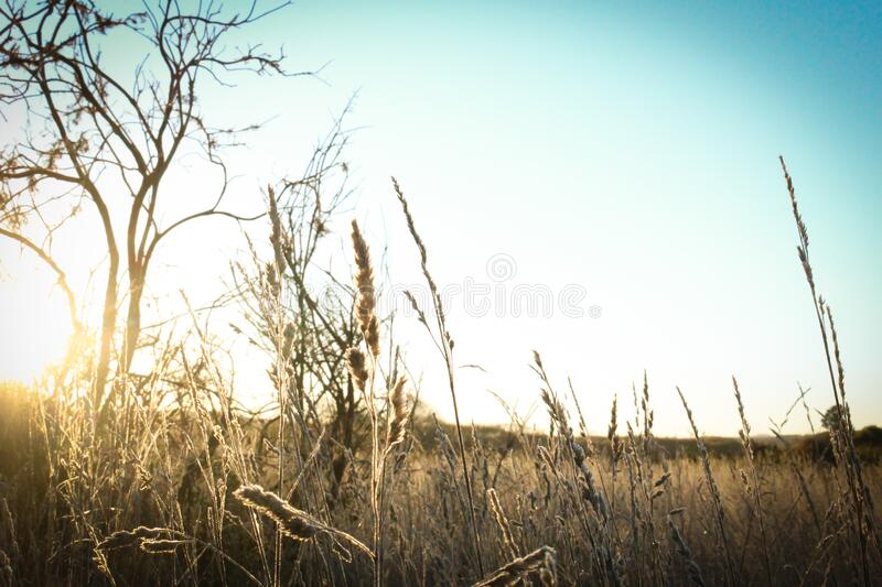 Brown Grass Under the Sun and Blue Sky stock photography