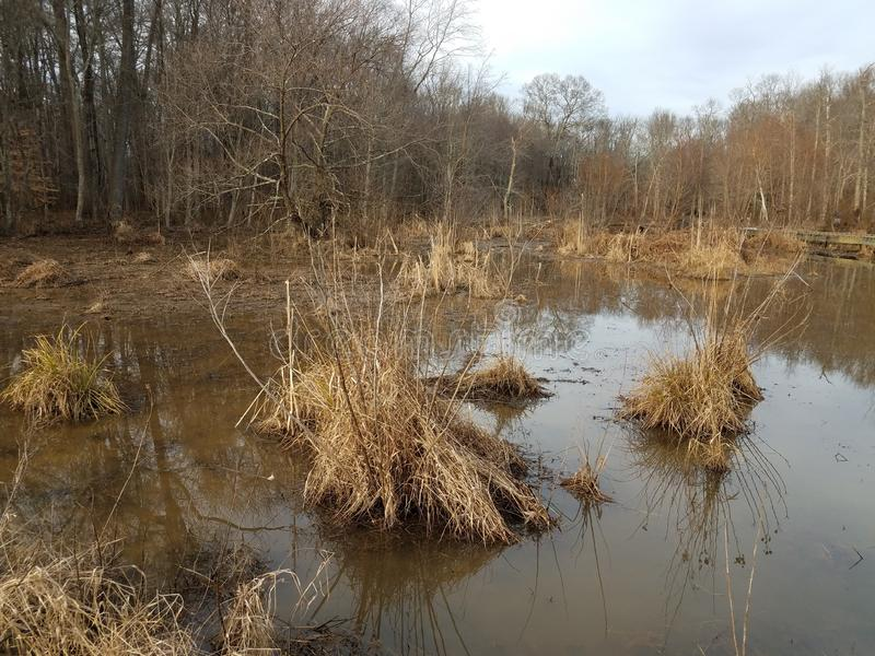 Brown grasses and muddy water and trees in wetland area. Brown grasses and muddy water and trees in wetland or marsh area royalty free stock photos