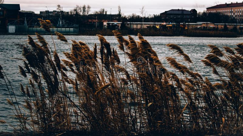 Brown Grasses Near Body of Water Across Houses stock photography