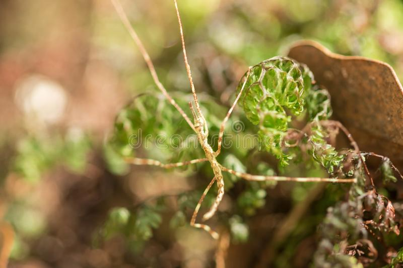 Brown grasshopper on Moss green in nature stock photos