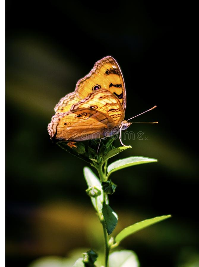 Brown and Gray Butterfly Perching on Plant royalty free stock images
