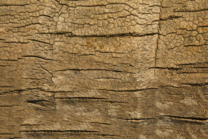 Brown gray palm bark close up. natural rough surface texture. A brown gray palm bark close up. natural rough surface texture royalty free stock photos