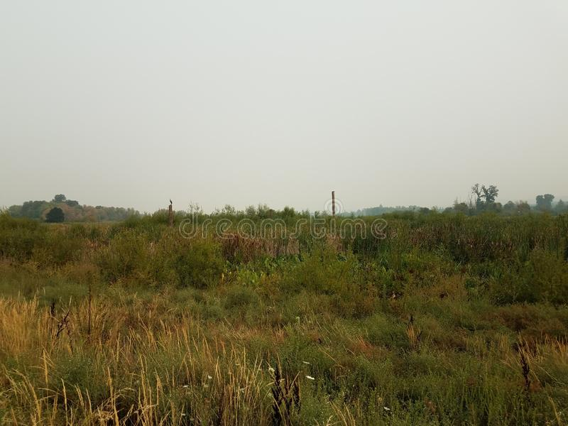 Brown and green grasses and plants in wetland area. Brown and green grasses and plants in wetland or swamp area royalty free stock image