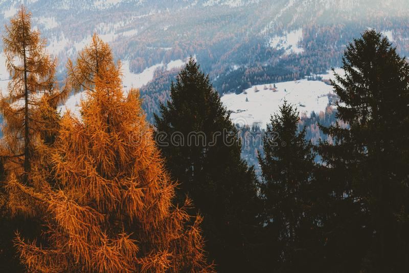Brown and Green Leaf Trees With Snow-covered Field in Background royalty free stock photography