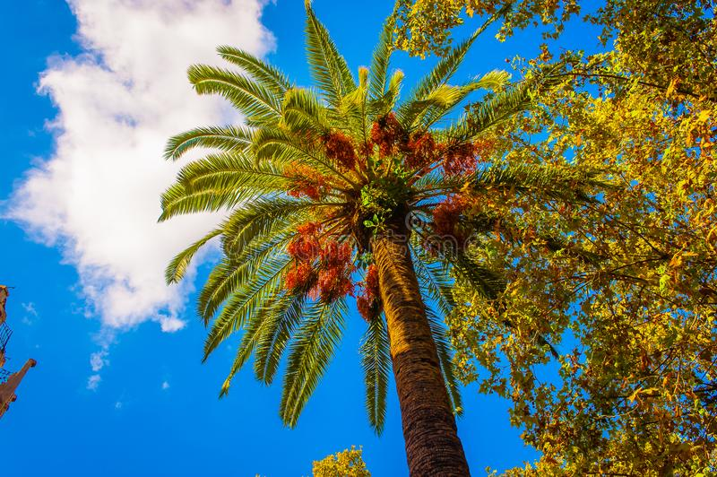 Brown and Green Palm Tree royalty free stock photo