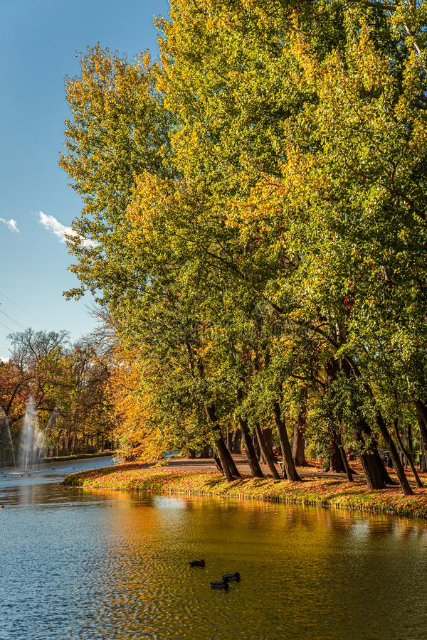Brown and green trees by the river in autumn. Europe stock photos