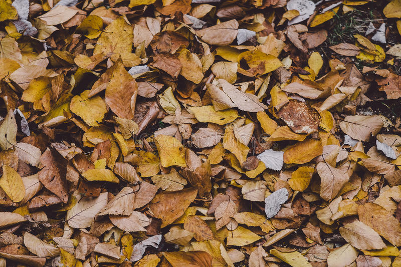 Brown Ground Covered With Withered Leaves Free Public Domain Cc0 Image