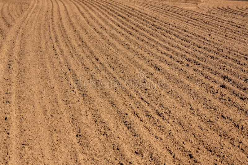 Freshly plowed field, furrows. Brown ground plowed field, harrow lines. Arable background. Pattern of curved ridges and furrows in a humic sandy field. A freshly stock photo