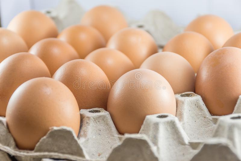 Brown-Hühnereien im Papierkartonkasten stockfoto