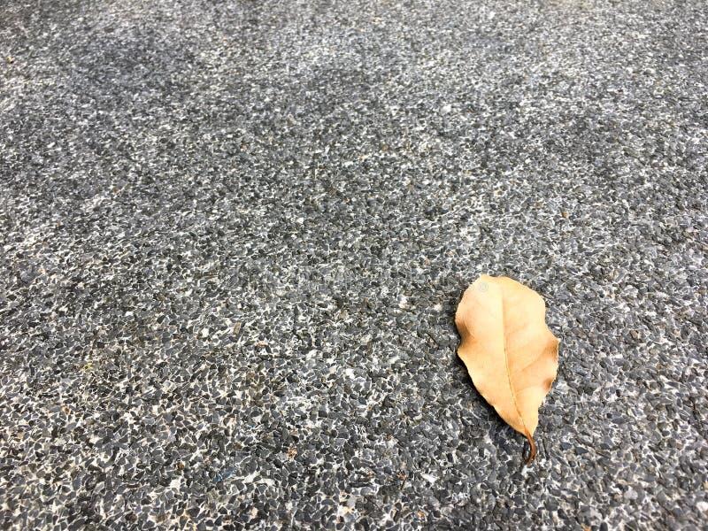 Brown ha asciugato la goccia della foglia sul pavimento di pietra granulare Fondo di superficie classico di struttura fotografia stock