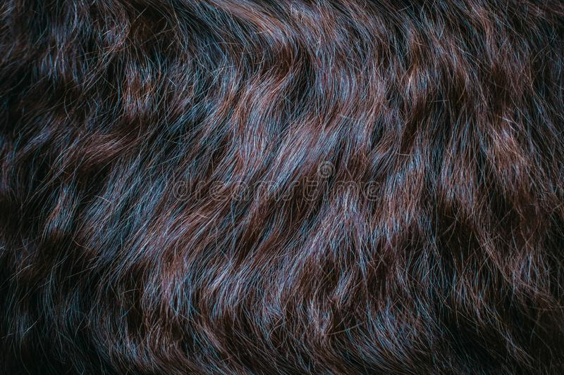 Brown hair close up. Textures and background royalty free stock image