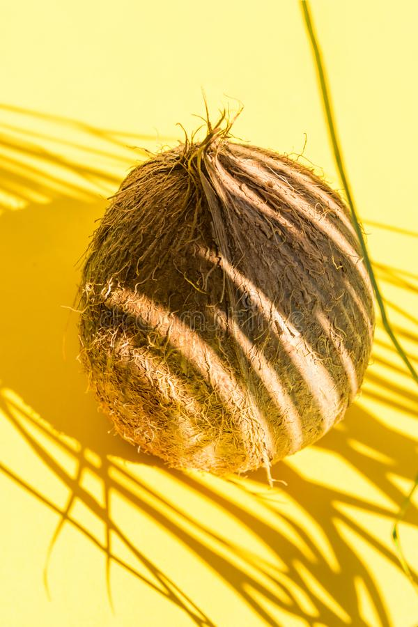 Brown hairy coconut in palm leaf silhouette pattern. Bright yellow background. Hard light harsh shadows. Creative food poster. royalty free stock image