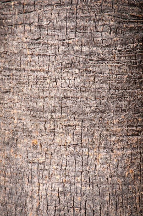 Brown-Hintergrundstamm einer Palmennahaufnahme. stockbilder
