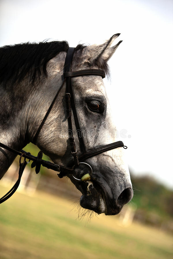 Download Brown Horse Royalty Free Stock Photos - Image: 11737498