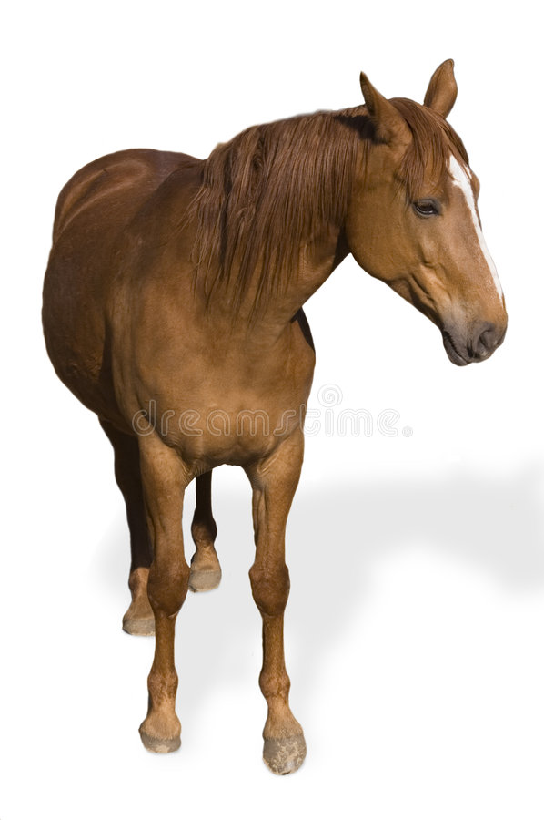 Download Brown Horse stock image. Image of unsaddled, brown, animal - 2518689