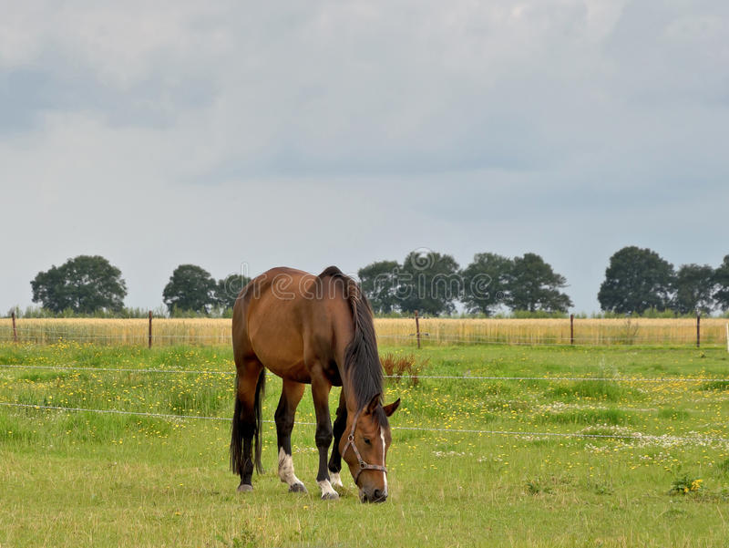 Download Brown horse stock photo. Image of fall, grass, eating - 26610634