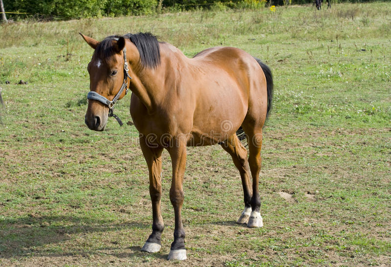 Download Brown horse stock photo. Image of mare, alone, lone, spot - 26884220