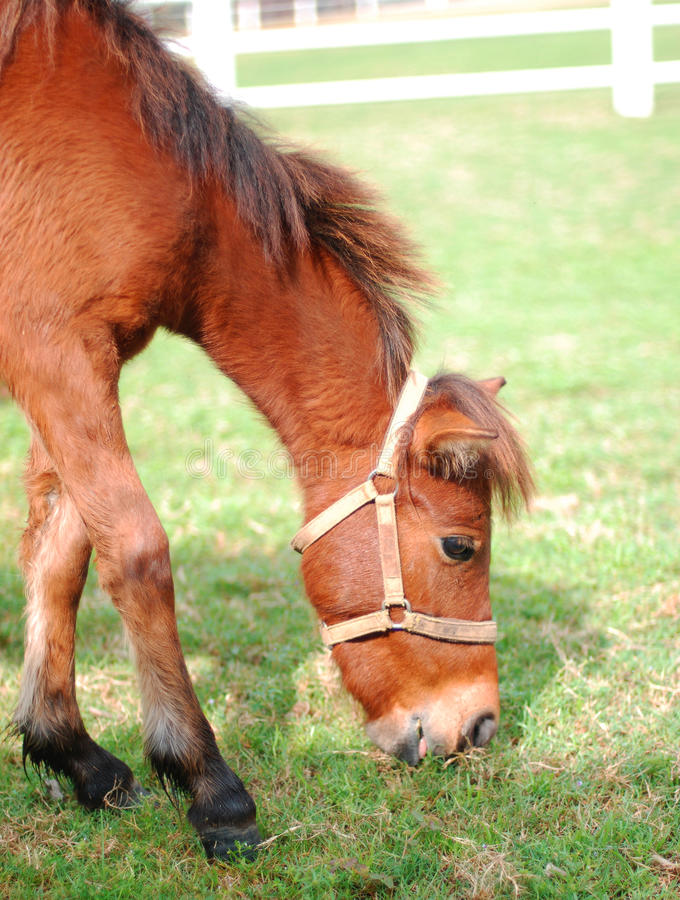 Download Brown horse stock image. Image of food, female, nature - 26958121