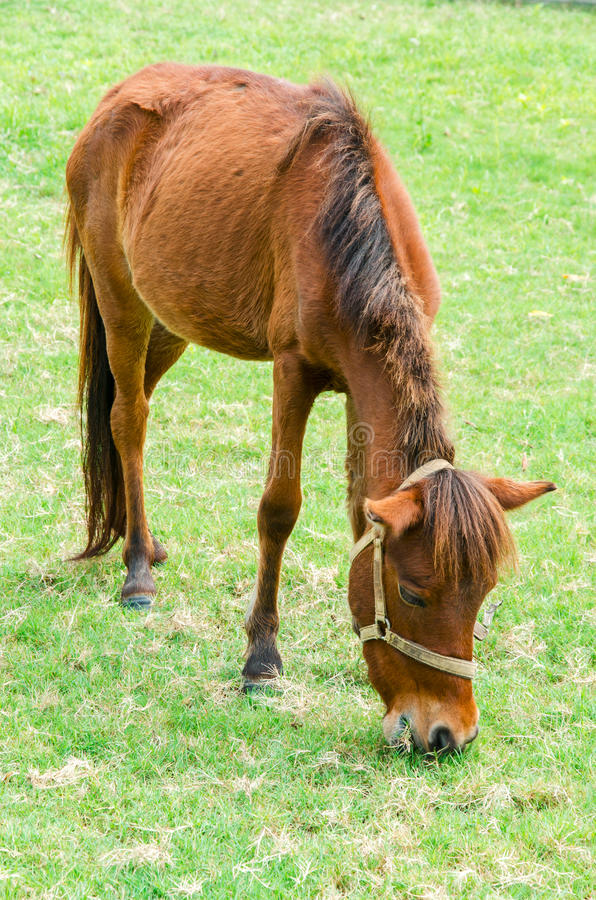 Download Brown horse stock photo. Image of colorful, mare, grass - 26958140