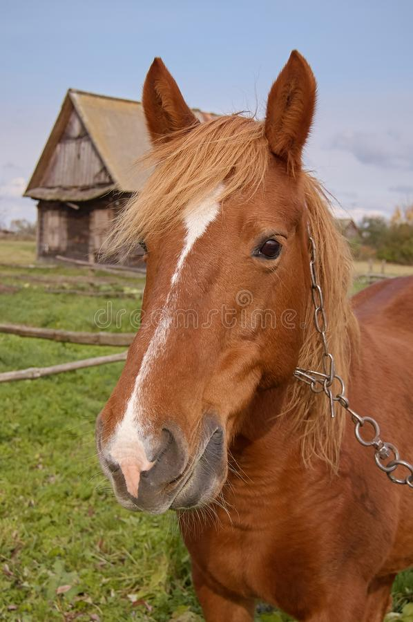 Brown horse close up portrait on a village background.  royalty free stock images