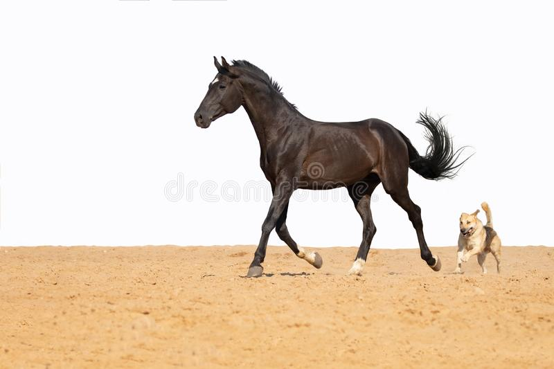 Horse and dog jumps on sand on a white background royalty free stock photo