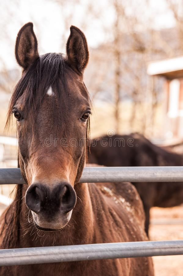 Brown Horse Beside Gray Metal Bar stock photography