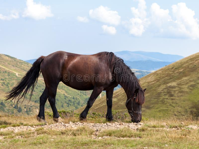 Brown horse in the mountains royalty free stock photo