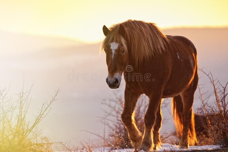 Brown horse on pasture in beautiful warm sunlight rays.  stock photo