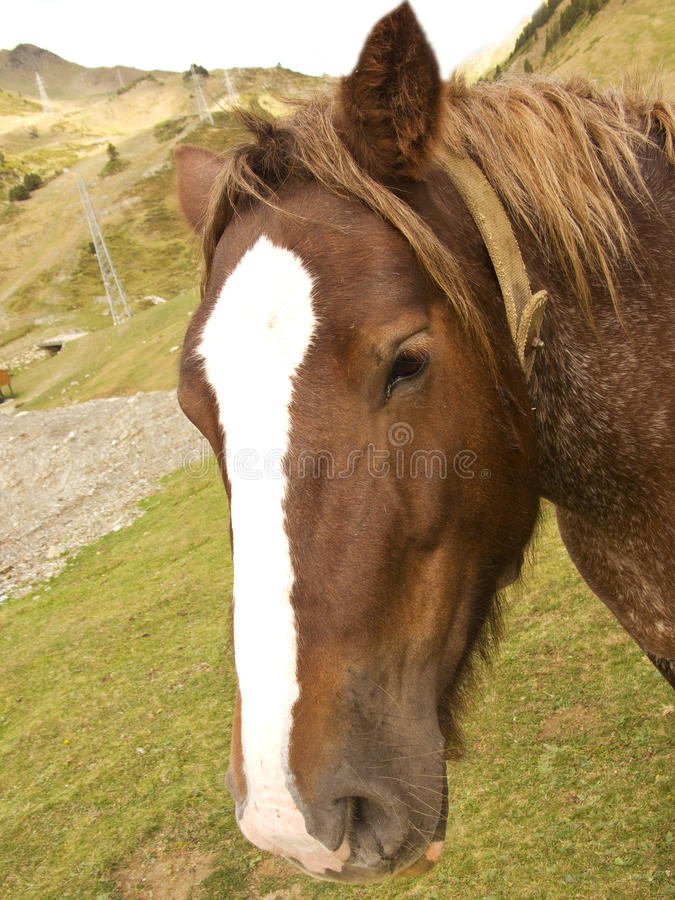 Brown horse portrait royalty free stock photos