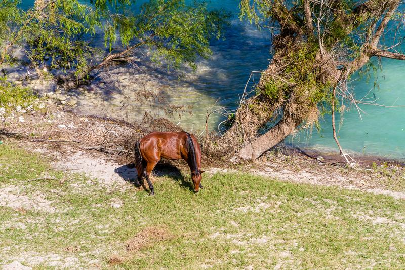 Horses at the river stock image