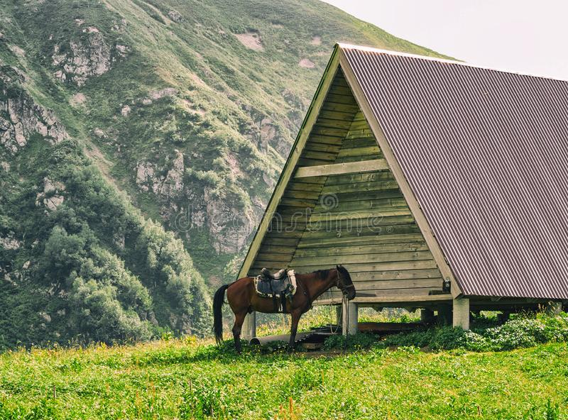 Brown horse with saddle tied to wooden building stock photos