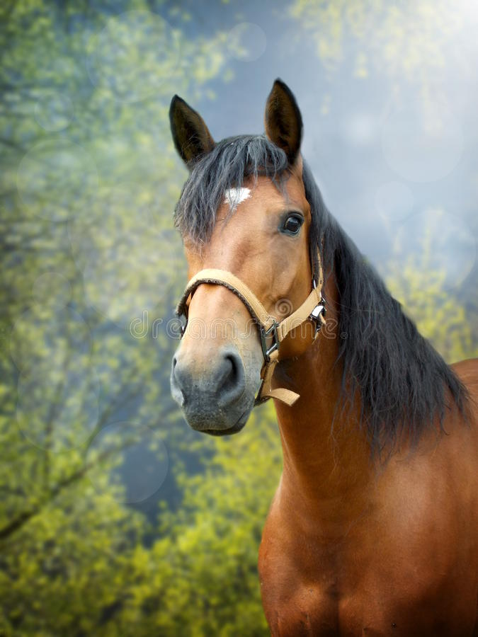 Brown horse in spring landscape. Beautiful brown horse in spring season landscape royalty free stock photo