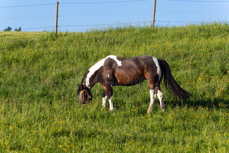brown horse on springtime meadow stock photos