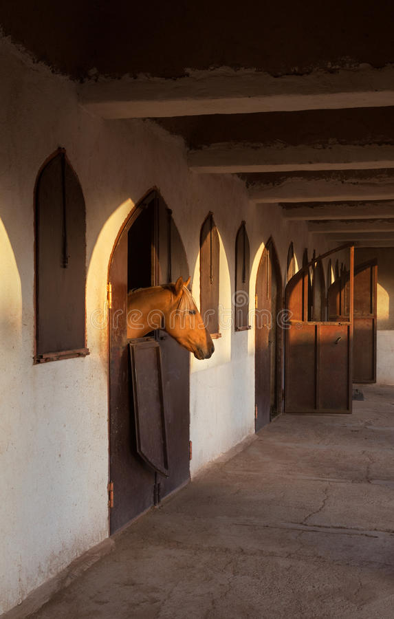 Brown Horse in the Stable with Warm Orange Glow of Sunset on His Head stock image
