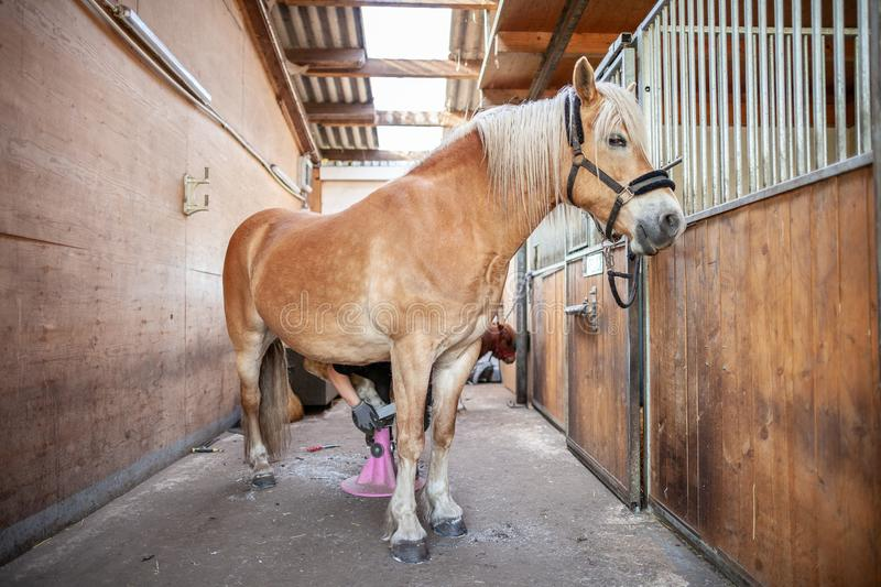 Brown horse stands in a stable stock photography