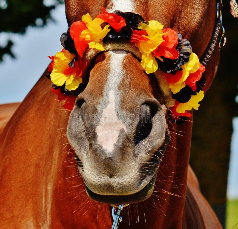 Brown Horse With Yellow Black and Red Flower Headdress royalty free stock image