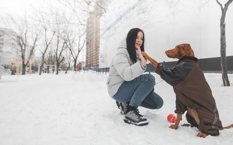 Brown-Hund, der ein im Schnee im Winter sitzen und spielen Kleid und ein glückliches Mädchen, der Hund trägt, gibt die fünf Eigen lizenzfreies stockfoto