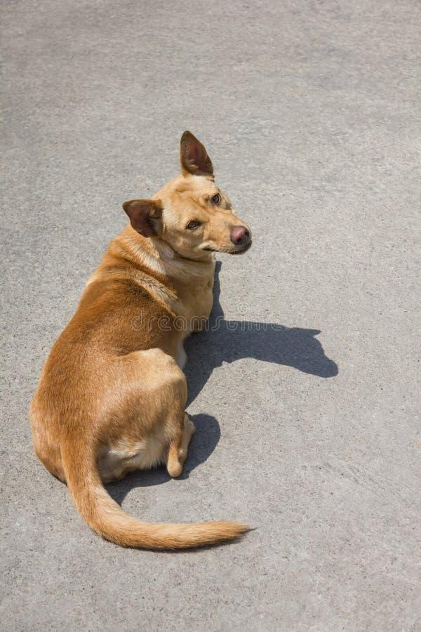 Brown-Hundeschlaf auf dem Zement lizenzfreie stockbilder