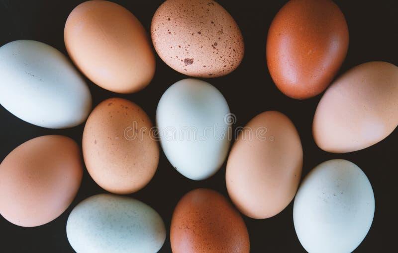 Brown i błękitnego kurczaka jajecznego mieszkania nieatutowa grupa świezi jajka fotografia stock