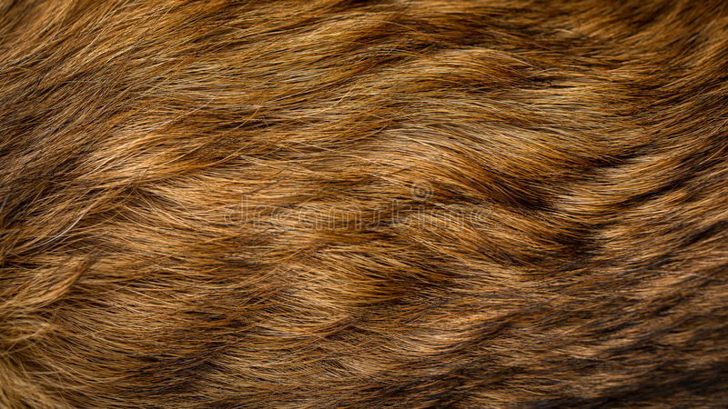 Brown i beż psia futerkowa tekstura obrazy stock