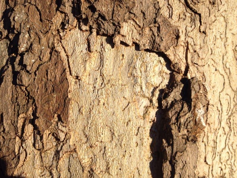 Brown i beżowa drzewnej barkentyny tekstura zdjęcie royalty free