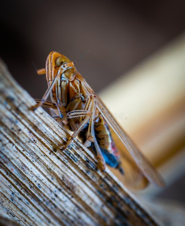 Brown-Insekt in der Makrophotographie stockfotografie