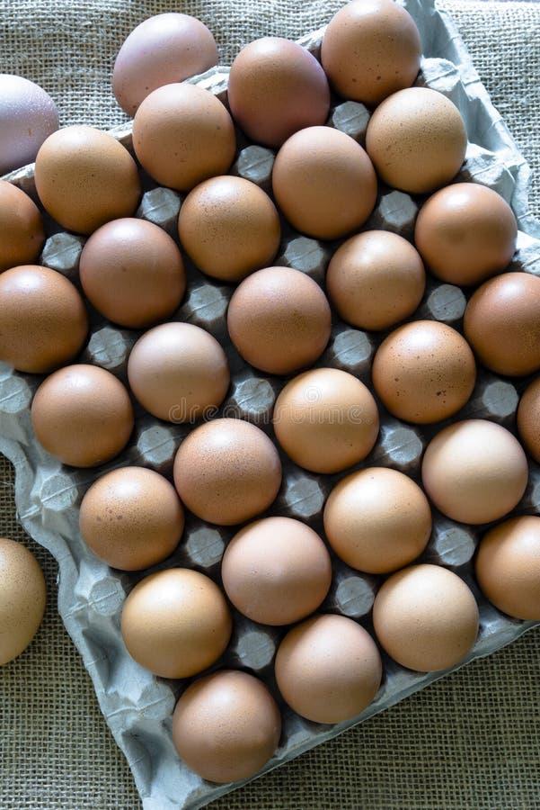Brown jajka umieszczaj?cy w jajecznym kartonie obraz stock