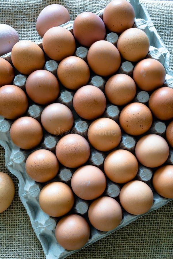 Brown jajka umieszczaj?cy w jajecznym kartonie obrazy royalty free