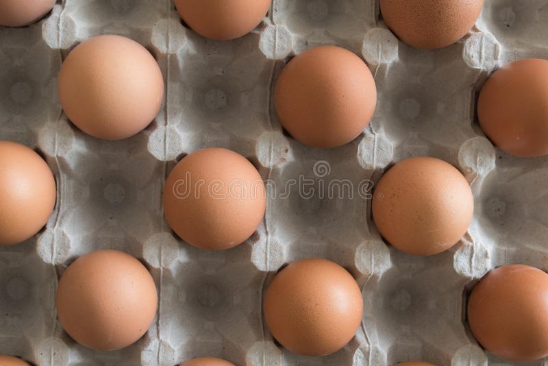 Brown jajka umieszczaj?cy w jajecznym kartonie obrazy stock