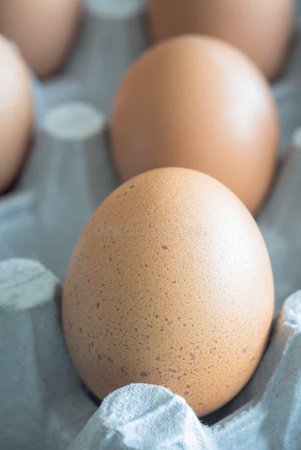 Brown jajka umieszczaj?cy w jajecznym kartonie zdjęcie royalty free
